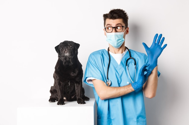 Médico veterinario alegre con guantes de goma y máscara médica, examinando lindo perro pug negro, de pie sobre fondo blanco.
