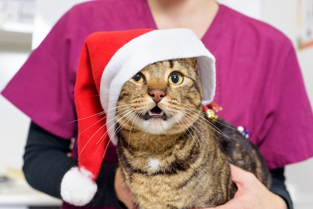 Médico veterinario examinando un lindo gato con gorro de santa claus