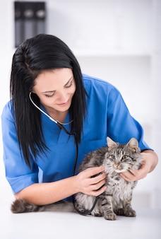 Médico veterinario está haciendo chequeo de lindo gato hermoso