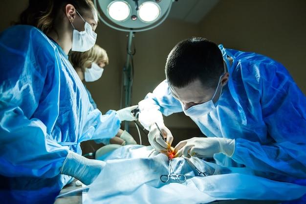Médico veterinario en quirófano para toma quirúrgica laparoscópica con iluminación de última generación.