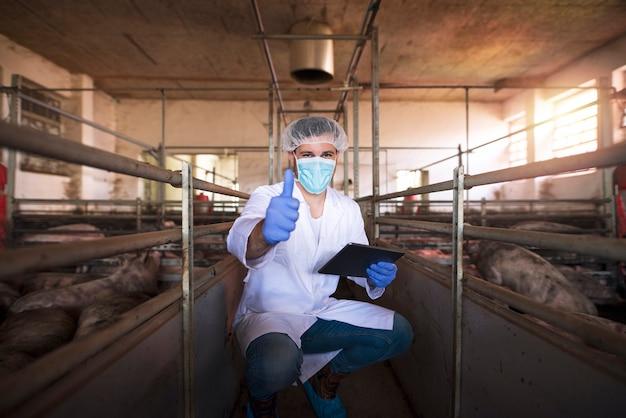 Médico veterinario con tableta sosteniendo los pulgares hacia arriba en la pocilga en la granja de cerdos