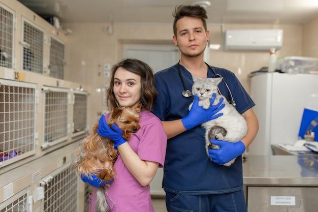 Los médicos veterinarios en uniforme tienen gatos y perros en el fondo de la clínica veterinaria del hospital