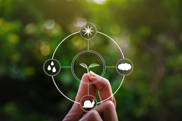 Medio ambiente ecológico mano sosteniendo un árbol el crecimiento de plántulas