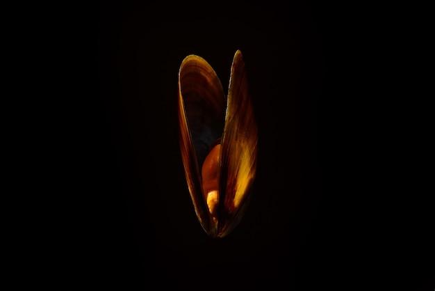 Mejillón sin cáscara crudo sobre fondo negro
