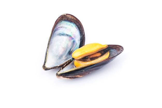 Los mejillones cocidos se aíslan en un fondo blanco.