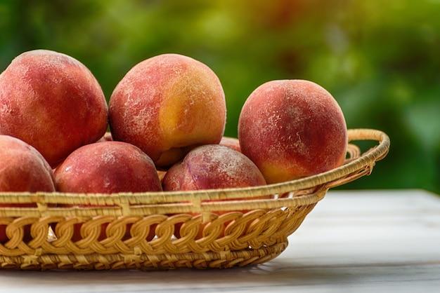 Melocotones maduros en una cesta de mimbre, jardín verde en el. de cerca. temporada de frutas
