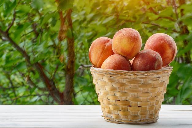 Melocotones maduros en una cesta de mimbre, jardín verde en el fondo. temporada de frutas