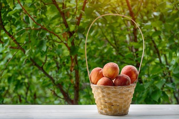Melocotones maduros en una cesta de mimbre, jardín verde en el. temporada de frutas