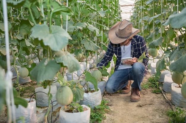 Melones en el jardín, hombre de yong que sostiene el melón en una granja de melones en invernadero.