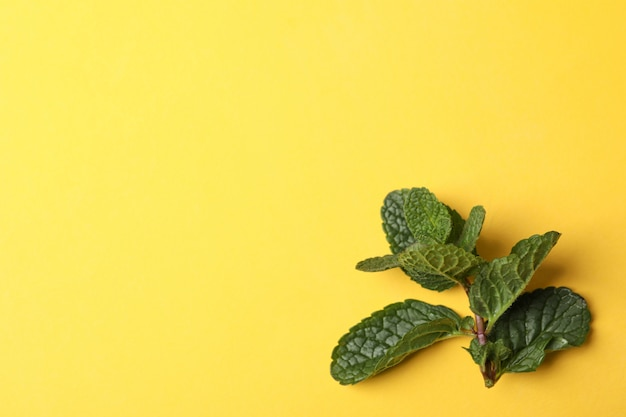 Menta fresca en amarillo, espacio para texto
