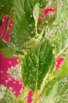 Menta fresca rodeada de burbujas de agua