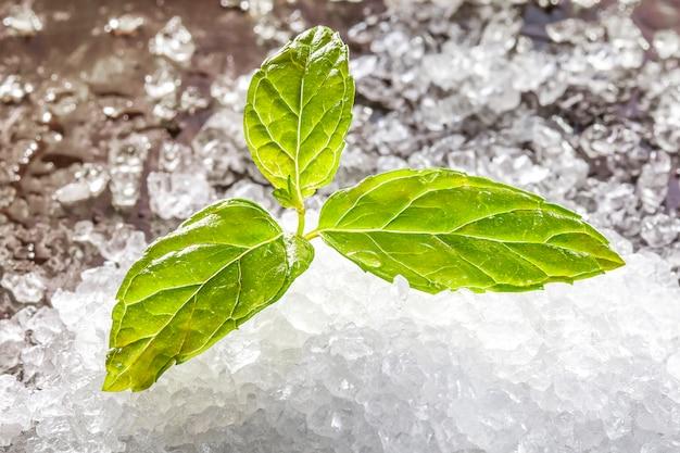 Menta fresca verde sobre hielo