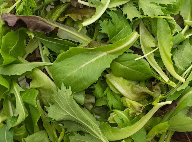 Mezcla de ensalada con rucola, frisee, radicchio y lechuga de cordero