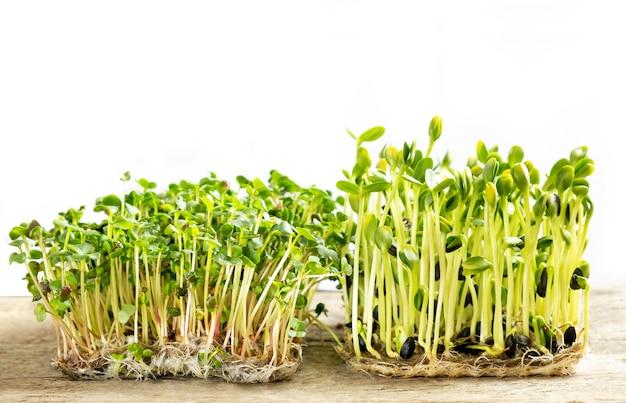 Micro verdes. semillas de girasol germinadas y brotes de rábano