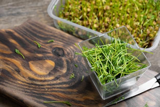 Microgreens. brotes de lentejas sobre un fondo de madera.