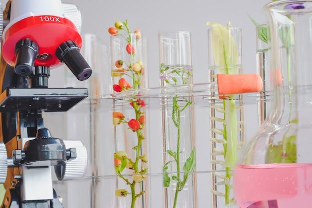 Microscopio y pequeña planta en tubo de ensayo, concepto de biotecnología de laboratorio.