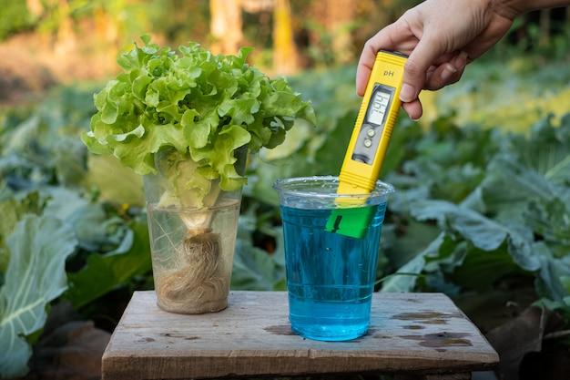 Mida el fertilizante líquido en una taza con la pantalla neutral del medidor de ph digital en el fondo de las plantas de lechuga