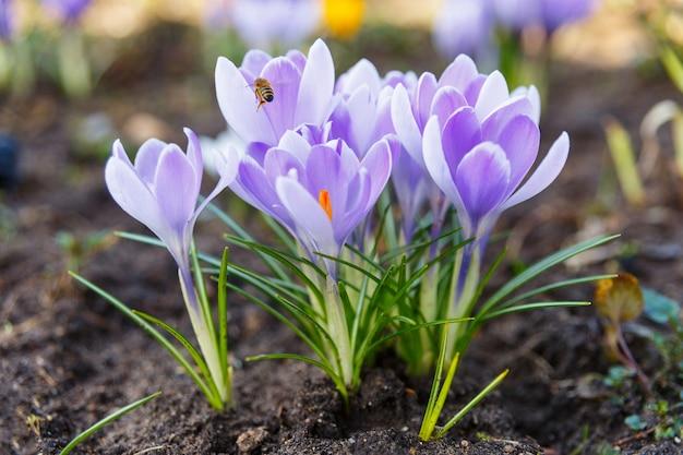 Miel de abejas recolectando polen