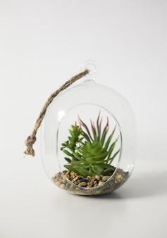 Mini jardín suculento en terrario de vidrio