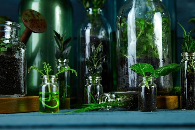 Mini jarrones de vidrio y botella con hojas verdes, plantas.