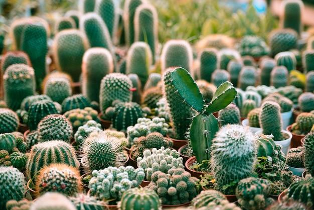 Miniatura de cactus en el jardín