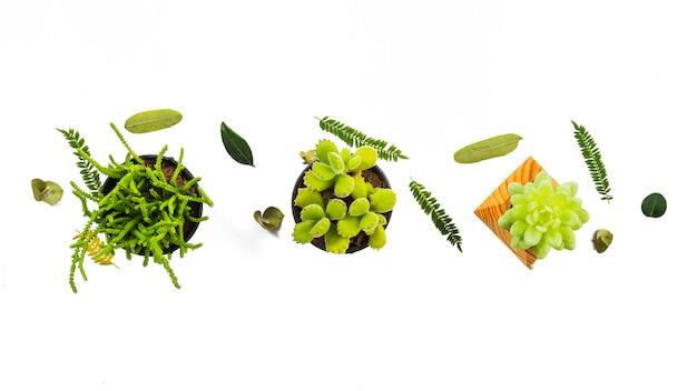 Minúscula composición de hojas y suculentas.