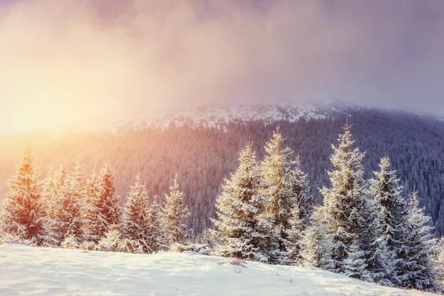 Misterioso paisaje invernal con niebla, majestuosas montañas