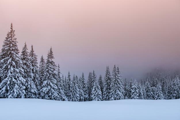 Misterioso paisaje de invierno, majestuosas montañas con árboles cubiertos de nieve.