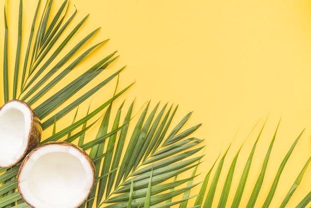 Mitades de coco y hojas de palma en esquina.