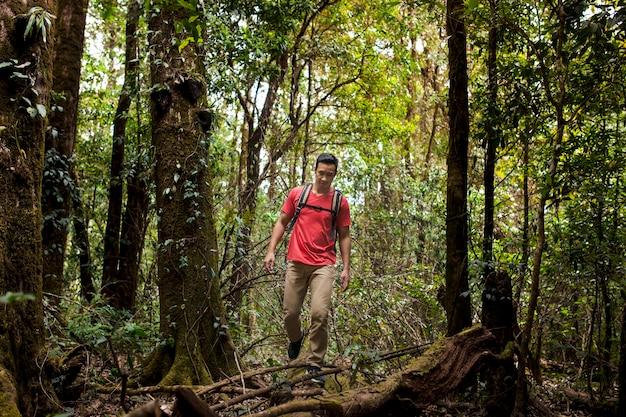 Mochilero caminando por el bosque