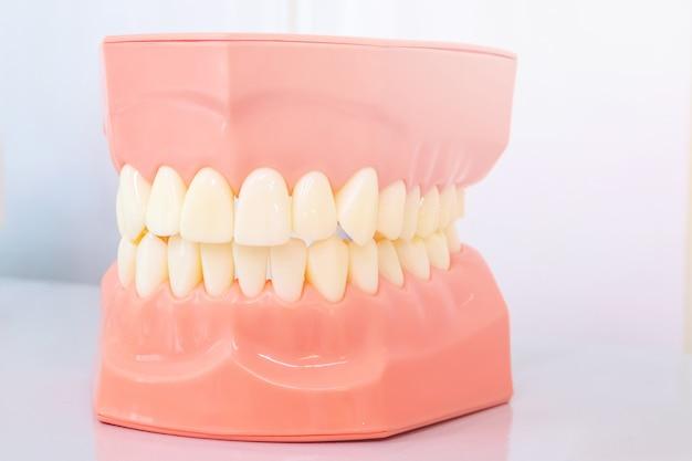 Modelo de la cavidad oral, modelo de mandíbula para clínicas estomatológicas.