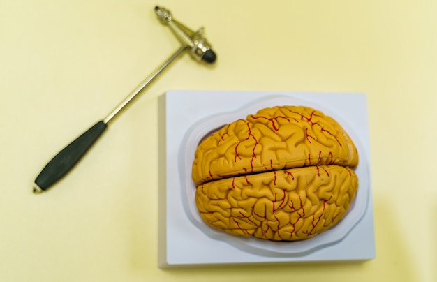 Modelo de cerebro humano sobre la mesa. anatomía del cerebro humano. representación 3d. hummer de neurocirugía.