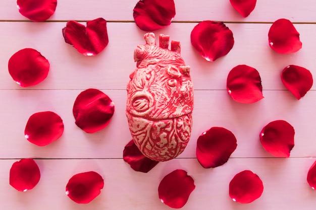 Modelo de corazón y conjunto de pétalos de flor roja.