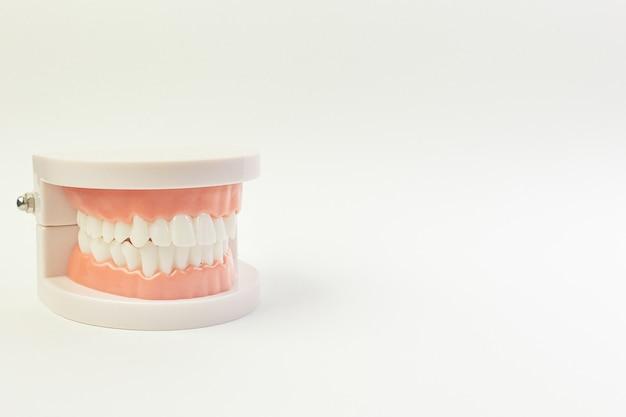 El modelo del diente en el fondo blanco para el contenido dental.