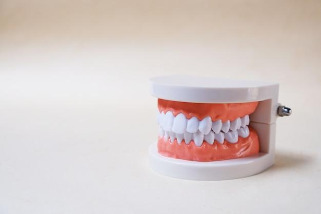 Modelo de dientes, herramientas de enseñanza.
