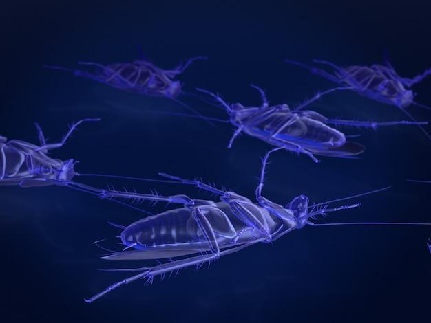 Modelo de rayos x de cucarachas muertas