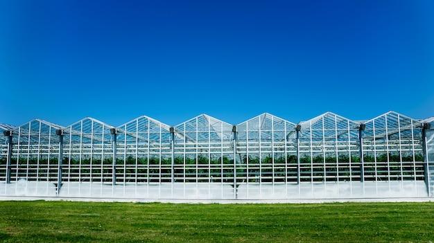 Modernos invernaderos de cristal contra el cielo azul.