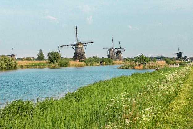 Molinos de viento holandeses tradicionales con hierba verde en primer plano, países bajos