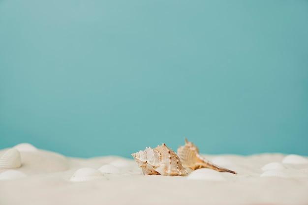 Mollusca sobre un fondo azul de verano