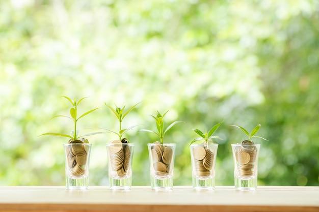 Monedas en cinco vasos de vidrio con pequeños árboles.