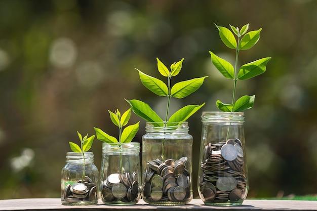 Monedas en cuatro jarras de vidrio con planta crecen paso sobre madera