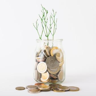 Monedas en jarra con planta