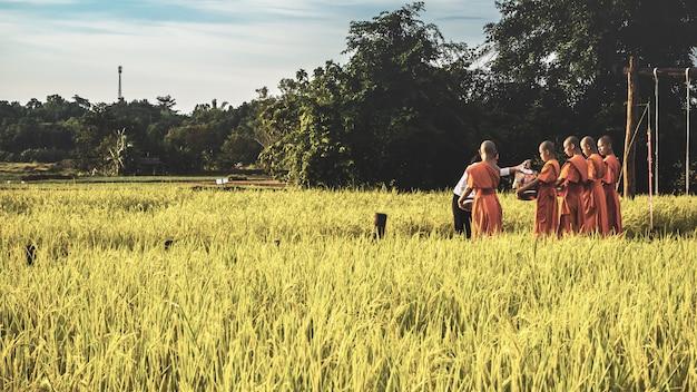 Monje con arrozal en tailandia