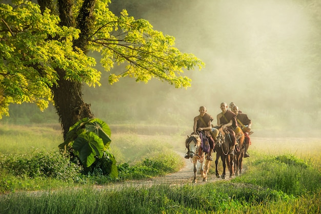 Monje budista con túnica marrón monta a caballo y pide limosna (invisible en tailandia), un árbol al lado del que la gente monta a caballo en el campo en chiangrai, tailandia