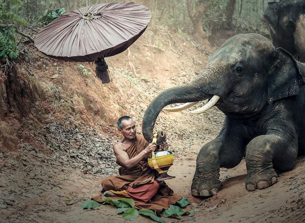 Monje en la selva con elefante, tailandia