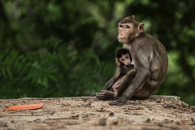 Monky mamá con bebé en el bosque de tailandia