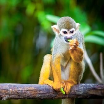 Mono ardilla en el bosque verde