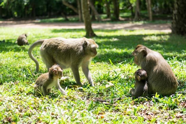 Mono bebé familia