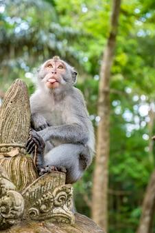 Mono de cola larga balinesa en una estatua