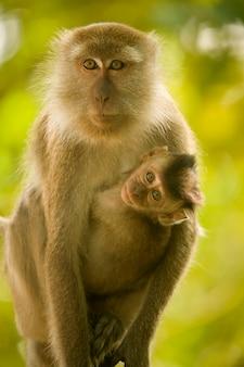 Mono con bebé
